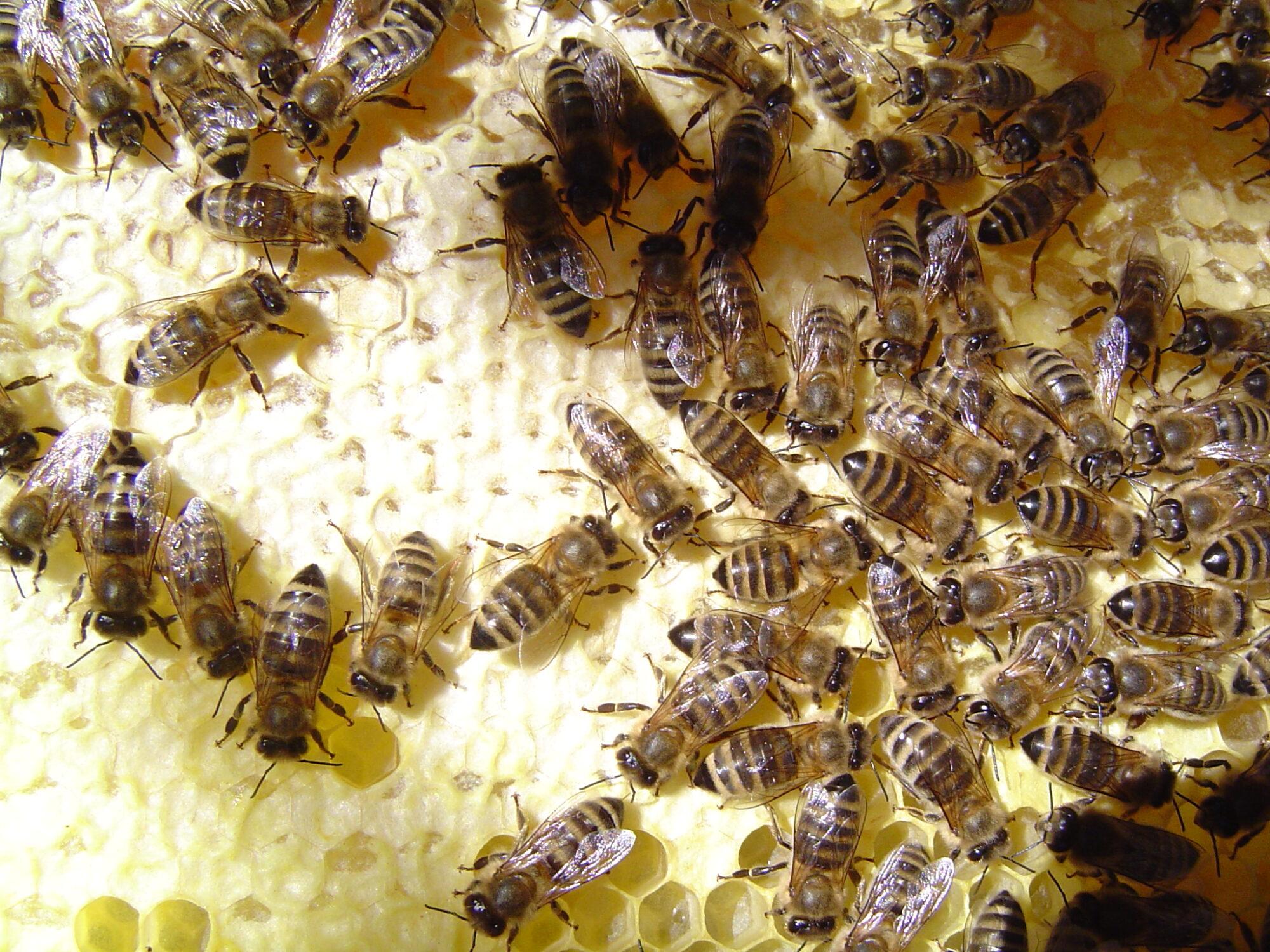 HoneyWorld